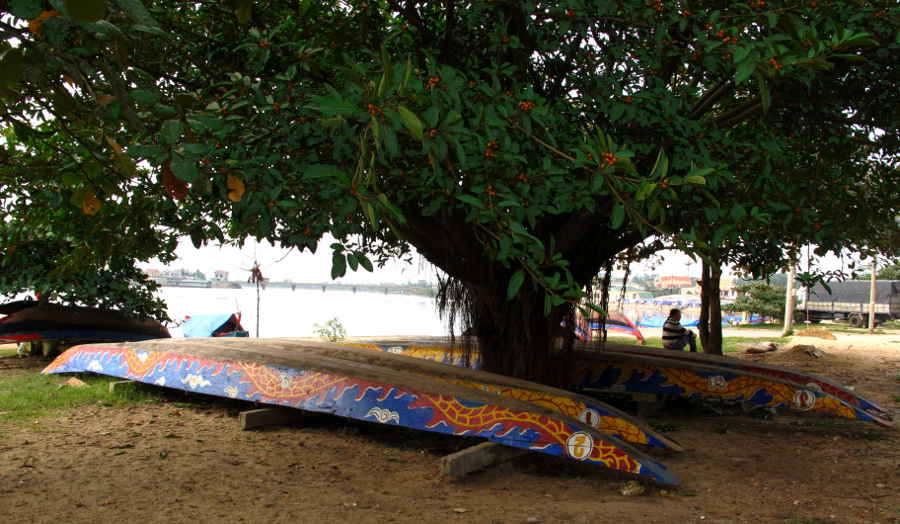 Four dragon boats under banyan tree.